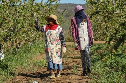 هل تدفع أزمة كورونا تونس إلى مزيد التفكير في أمنها الغذائي؟