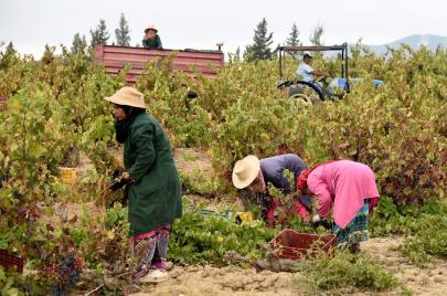 العاملات في القطاع الفلاحي.. عن نساء يضمنّ الأمن الغذائي بالعرق والدم